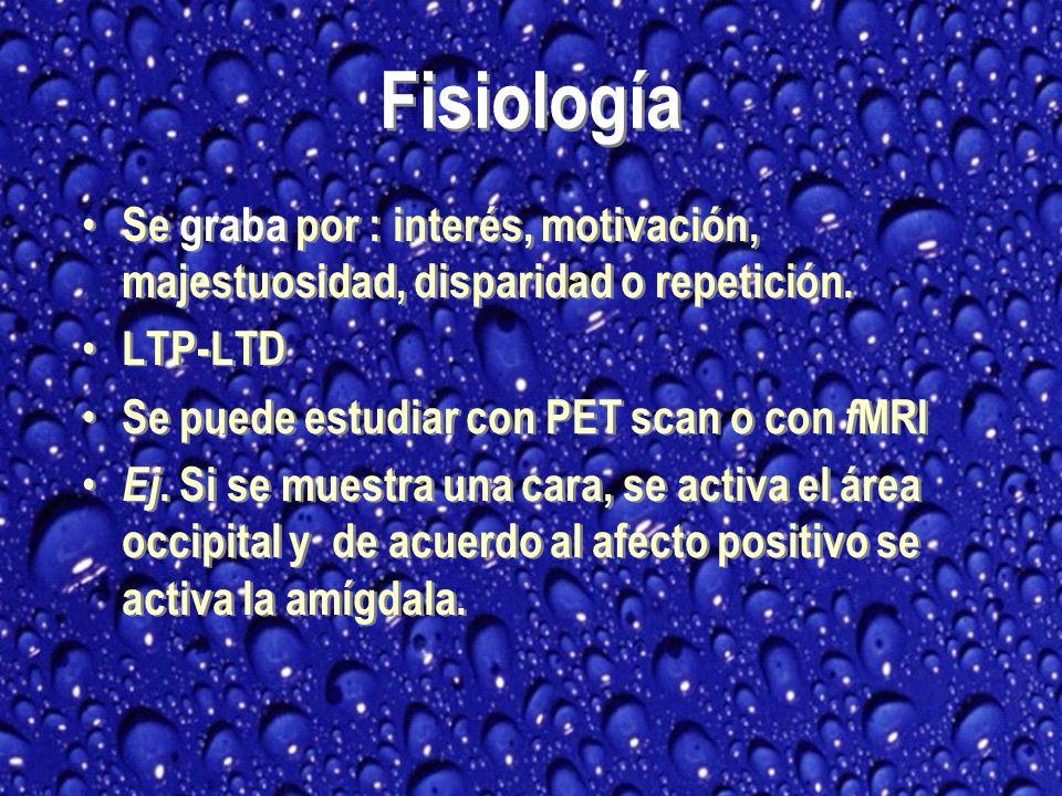 Fisiología Se graba por : interés, motivación, majestuosidad, disparidad o repetición. LTP-LTD. Se puede estudiar con PET scan o con fMRI.
