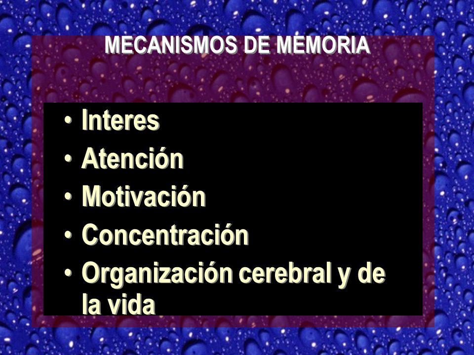 Organización cerebral y de la vida