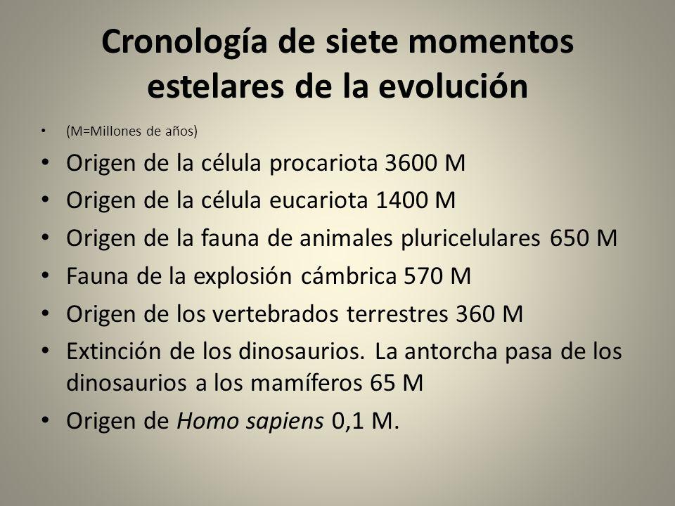 Cronología de siete momentos estelares de la evolución