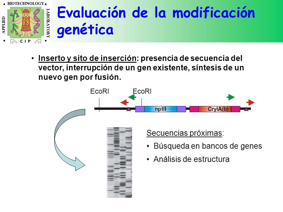 Evaluación de la modificación genética