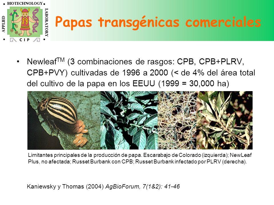 Papas transgénicas comerciales