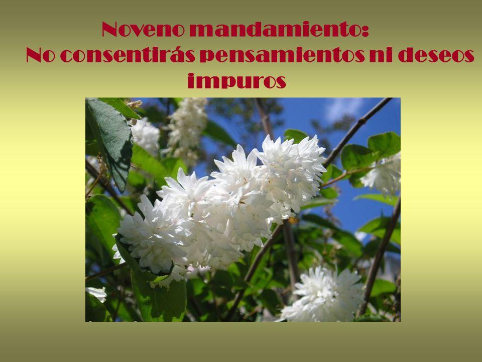 Noveno mandamiento: No consentirás pensamientos ni deseos impuros