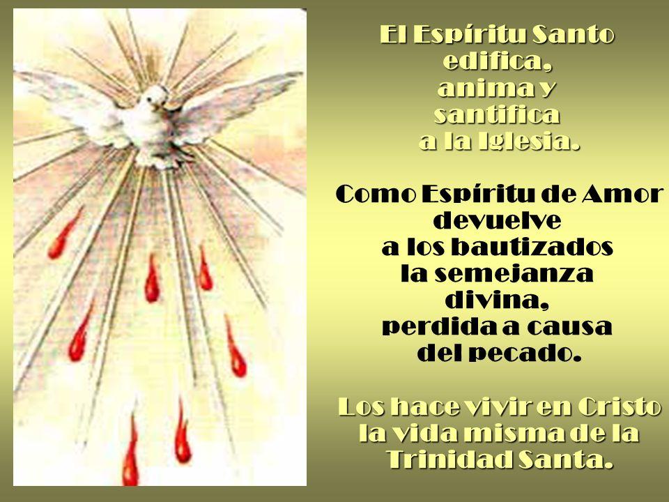El Espíritu Santo edifica, anima y santifica a la Iglesia.