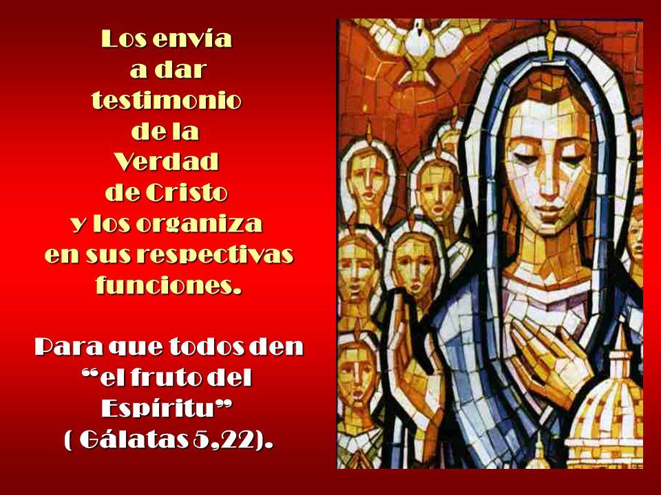 testimonio de la Verdad de Cristo y los organiza en sus respectivas