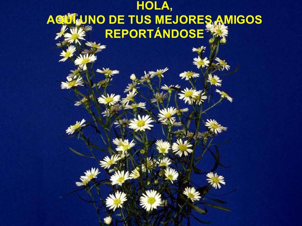 AQUÍ UNO DE TUS MEJORES AMIGOS REPORTÁNDOSE