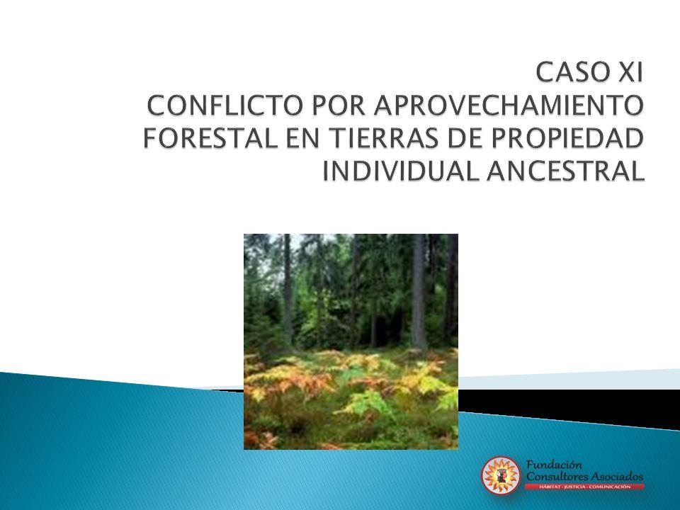 CASO XI CONFLICTO POR APROVECHAMIENTO FORESTAL EN TIERRAS DE PROPIEDAD INDIVIDUAL ANCESTRAL