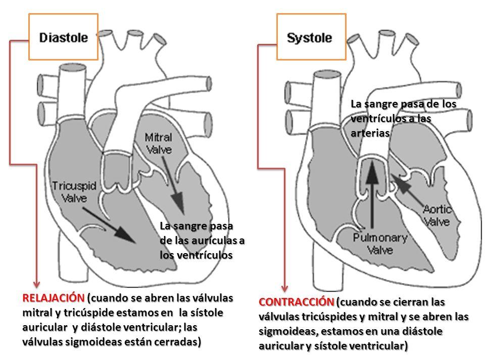 Diferencias entre sistole y diastole yahoo dating 2