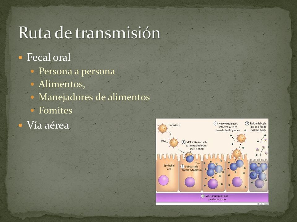 Ruta de transmisión Fecal oral Vía aérea Persona a persona Alimentos,