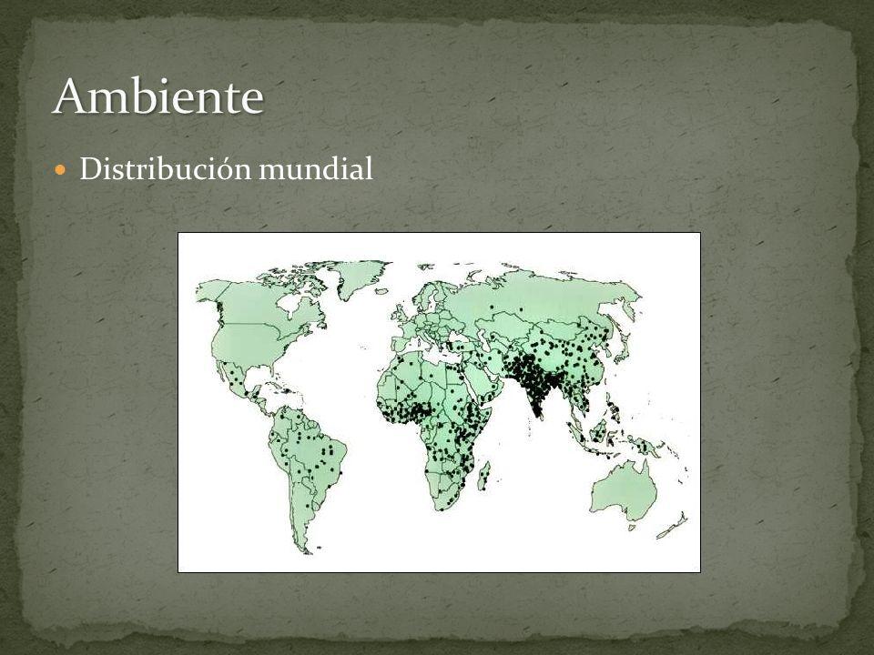 Ambiente Distribución mundial Imagen tomada de: rotavirusvaccine.org