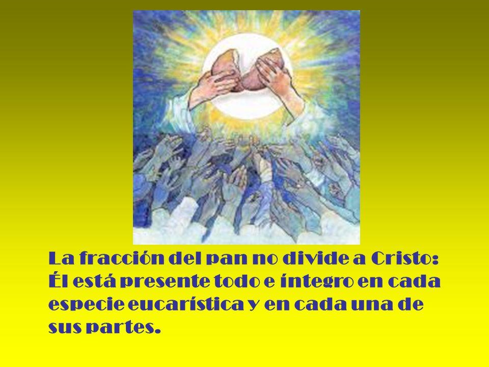 La fracción del pan no divide a Cristo: