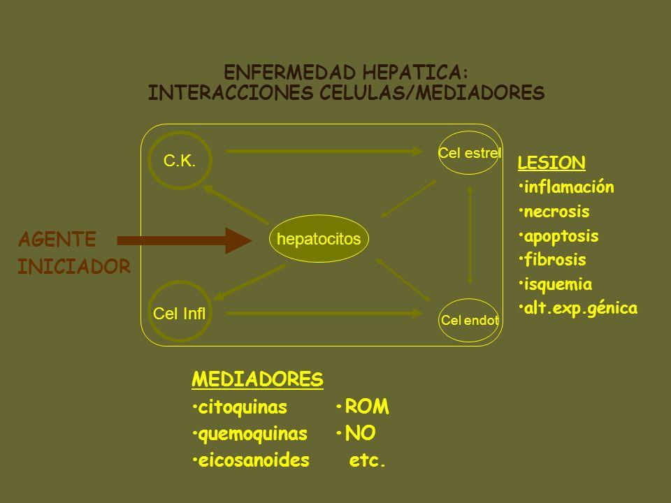 ENFERMEDAD HEPATICA: INTERACCIONES CELULAS/MEDIADORES