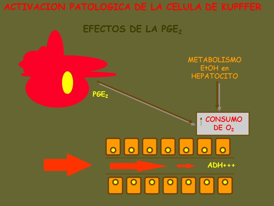 ACTIVACION PATOLOGICA DE LA CELULA DE KUPFFER