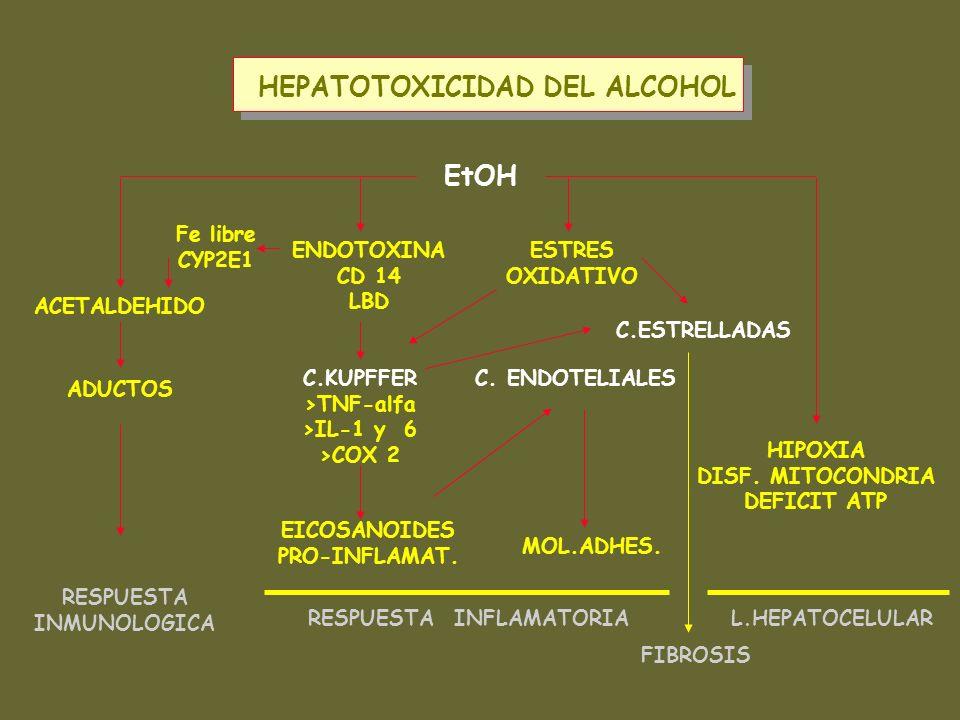 HEPATOTOXICIDAD DEL ALCOHOL RESPUESTA INFLAMATORIA