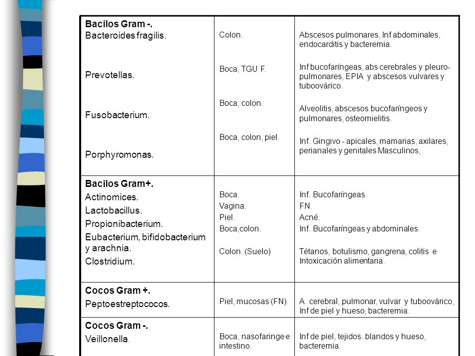 Bacilos Gram -. Bacteroides fragilis.