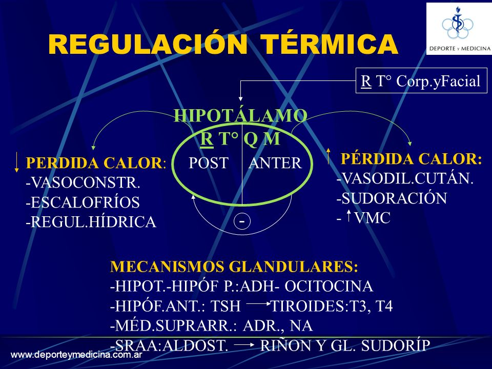 REGULACIÓN TÉRMICA HIPOTÁLAMO R T° Q M - R T° Corp.yFacial