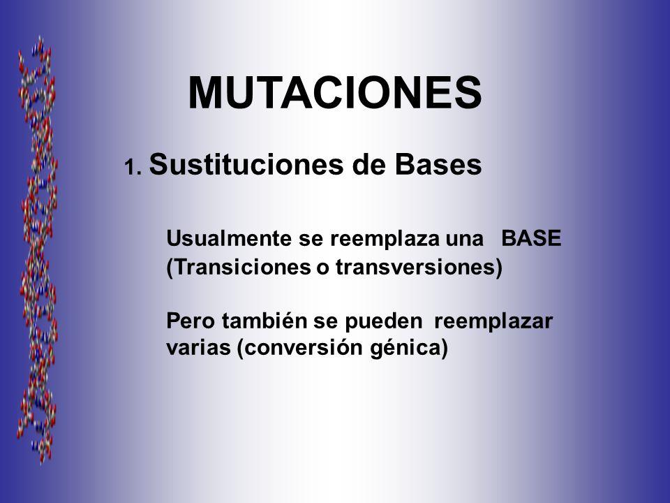 MUTACIONES 1. Sustituciones de Bases. Usualmente se reemplaza una BASE (Transiciones o transversiones)