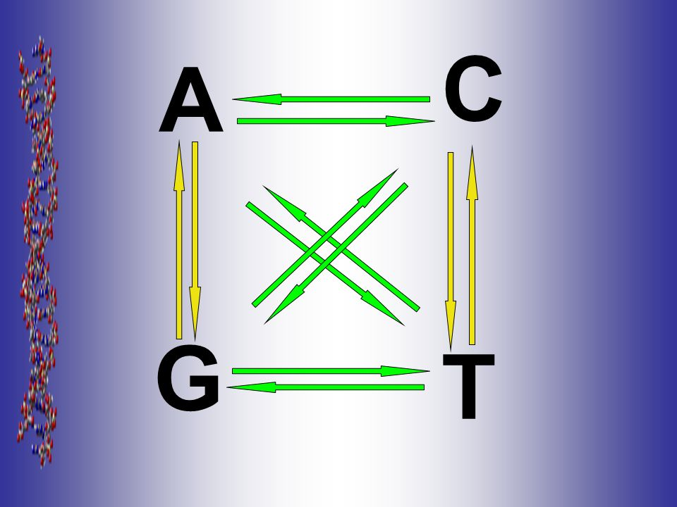 C A G T