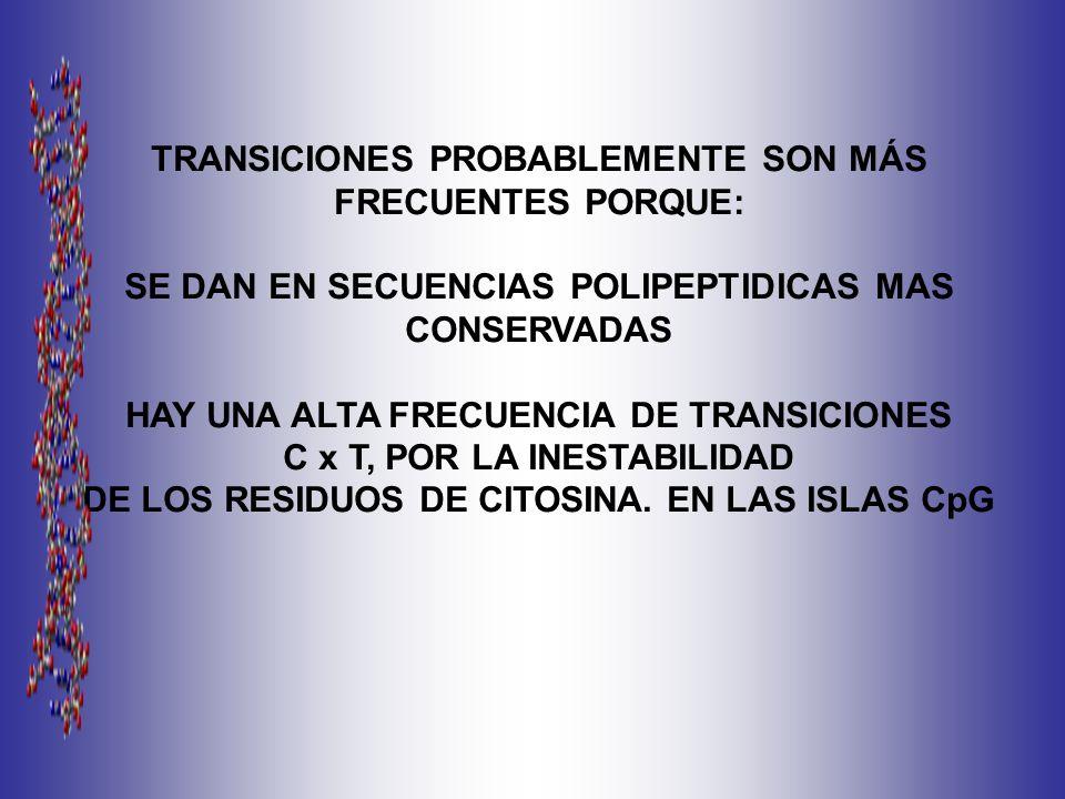 TRANSICIONES PROBABLEMENTE SON MÁS FRECUENTES PORQUE: