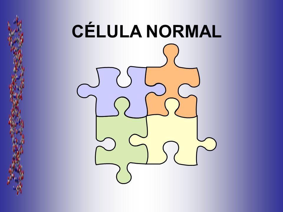 CÉLULA NORMAL