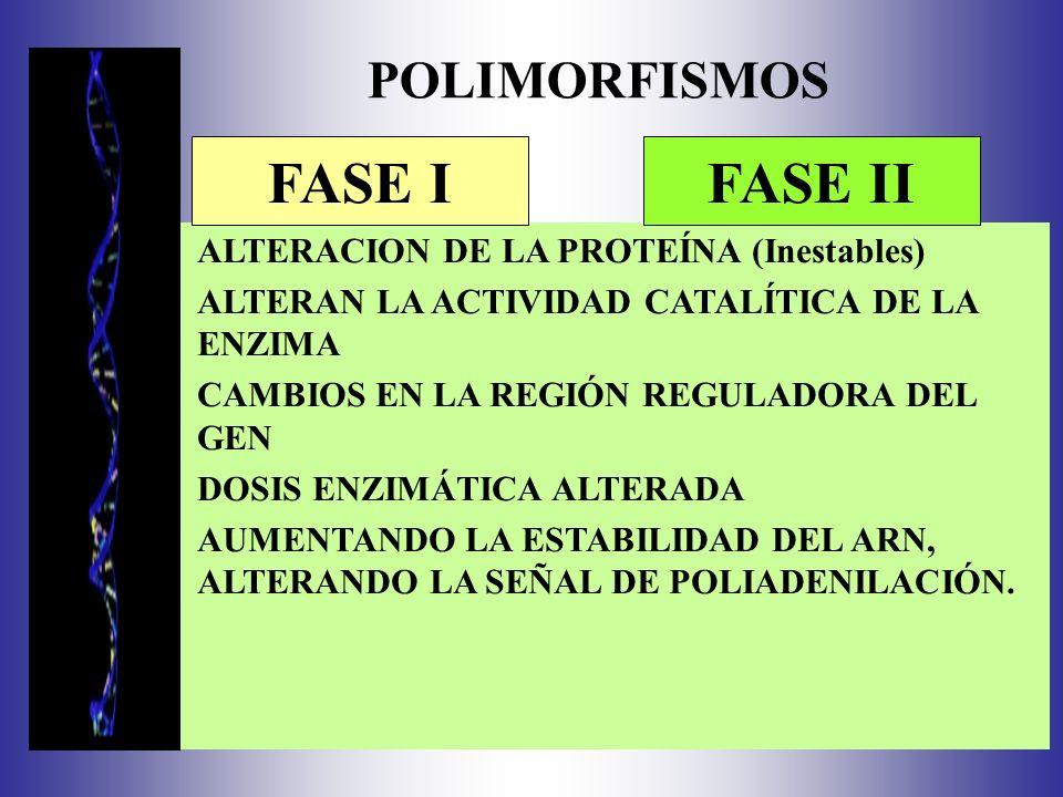 FASE I FASE II POLIMORFISMOS ALTERACION DE LA PROTEÍNA (Inestables)