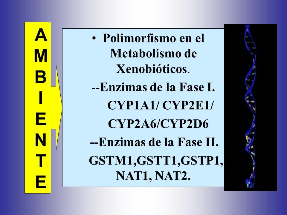 Polimorfismo en el Metabolismo de Xenobióticos.
