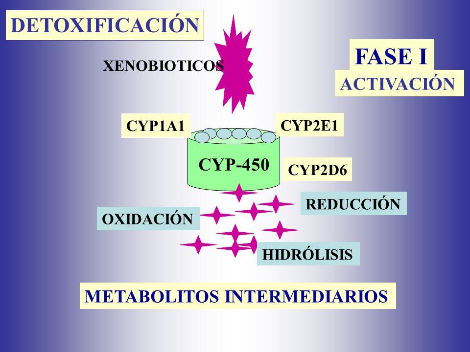 FASE I DETOXIFICACIÓN ACTIVACIÓN CYP-450 METABOLITOS INTERMEDIARIOS