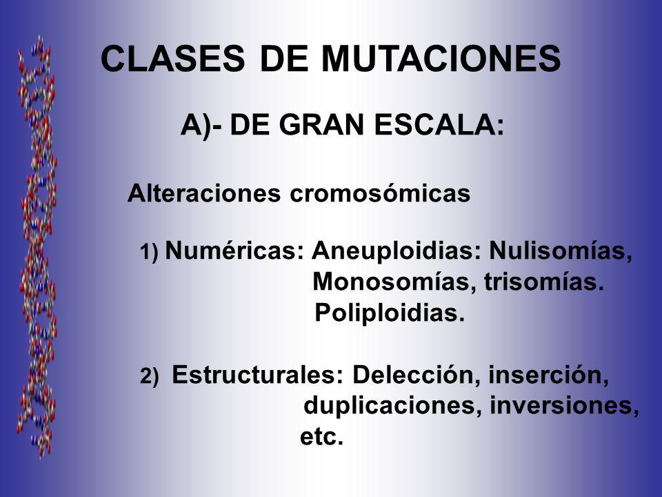 CLASES DE MUTACIONES Monosomías, trisomías. Poliploidias.