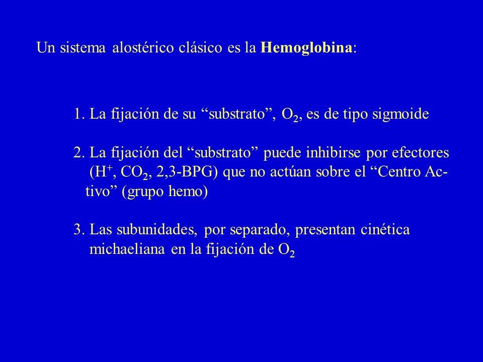 Un sistema alostérico clásico es la Hemoglobina: