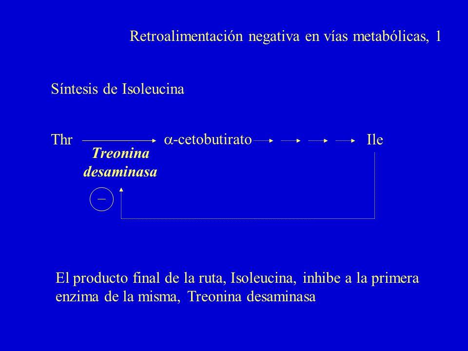 Retroalimentación negativa en vías metabólicas, 1