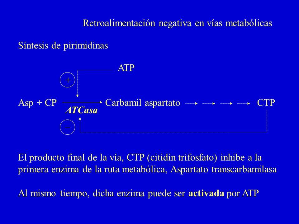 Retroalimentación negativa en vías metabólicas