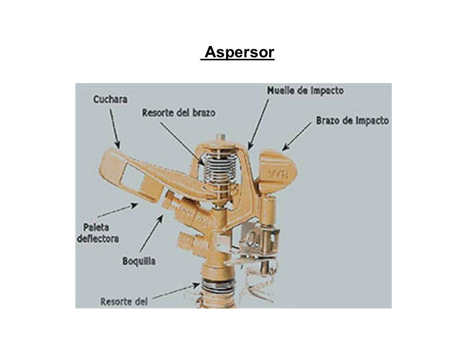 Aspersor