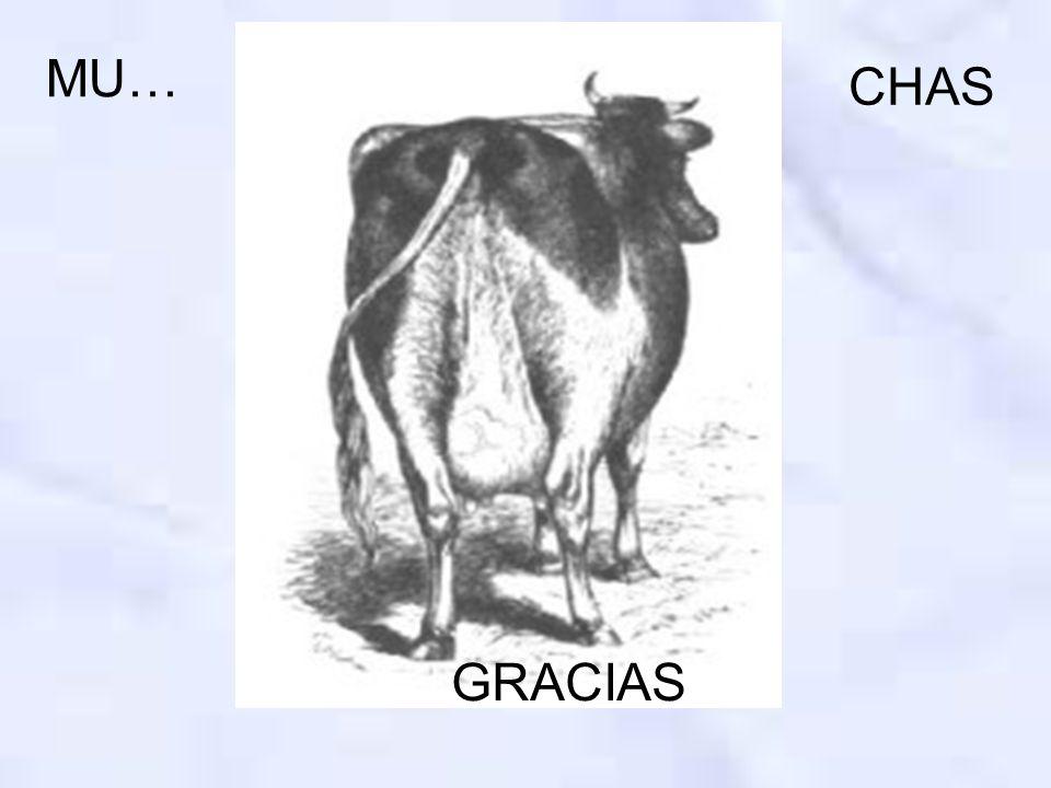MU… CHAS GRACIAS