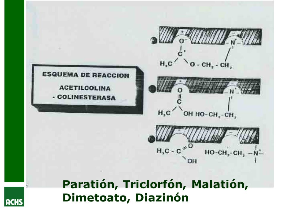 Paratión, Triclorfón, Malatión, Dimetoato, Diazinón
