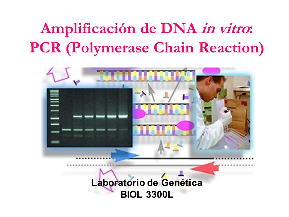 Amplificación de DNA in vitro: PCR (Polymerase Chain Reaction)
