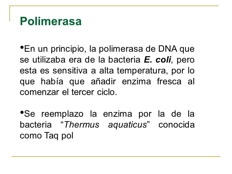 Polimerasa