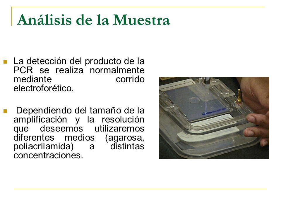 Análisis de la Muestra La detección del producto de la PCR se realiza normalmente mediante corrido electroforético.