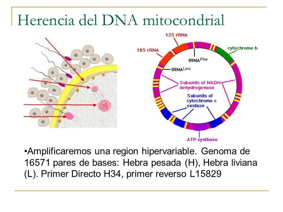 Herencia del DNA mitocondrial
