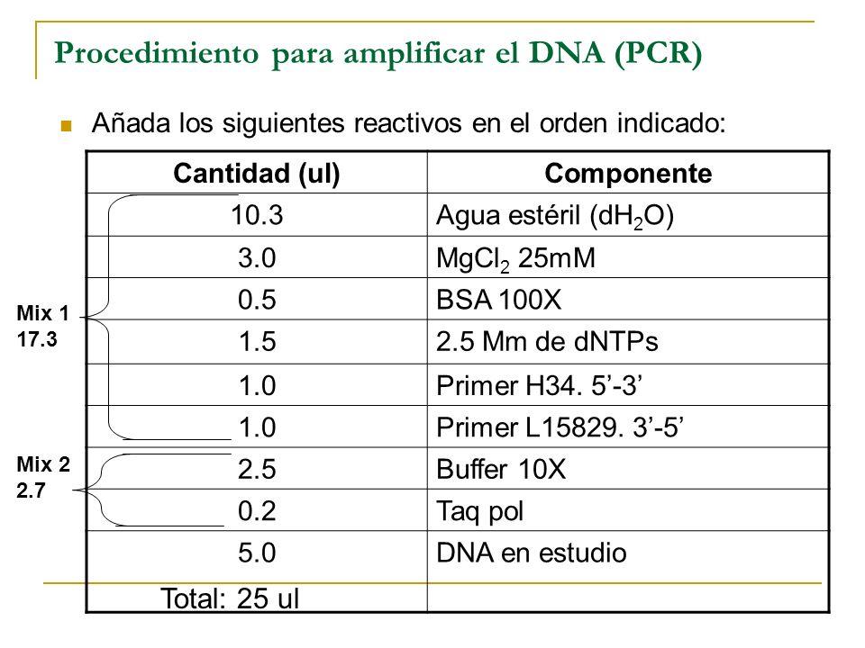 Procedimiento para amplificar el DNA (PCR)
