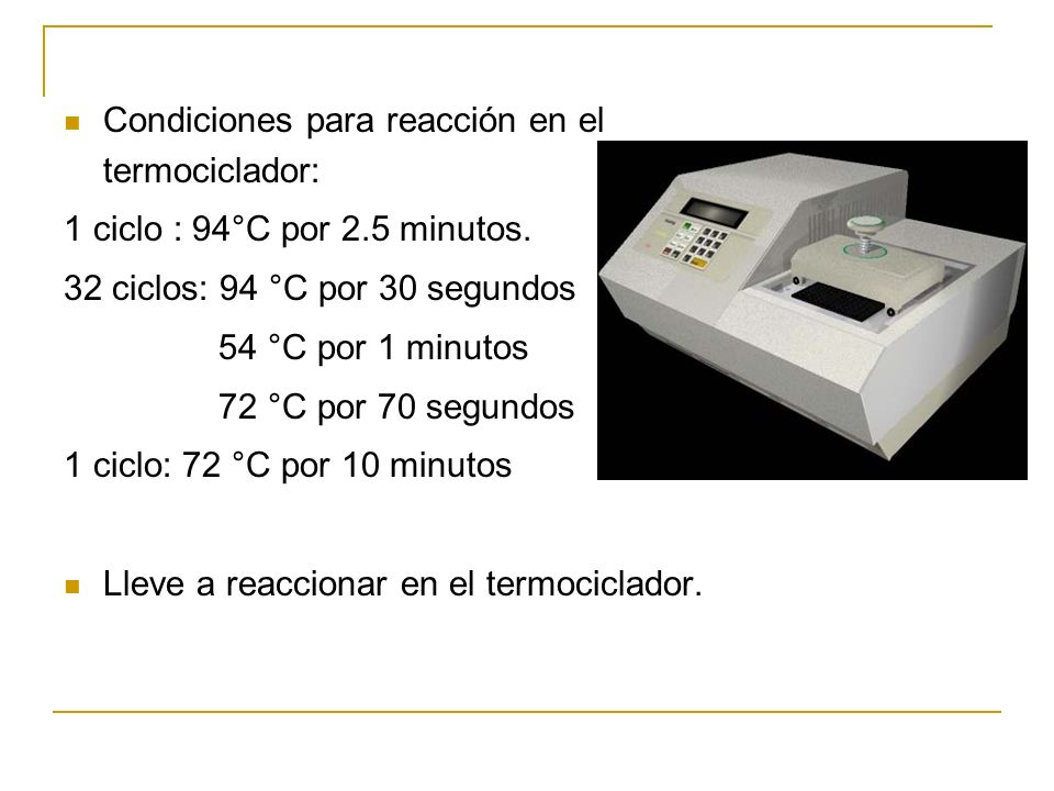 Condiciones para reacción en el termociclador: