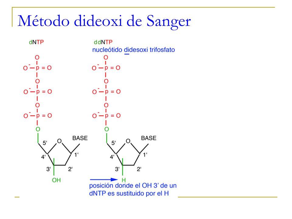 Método dideoxi de Sanger
