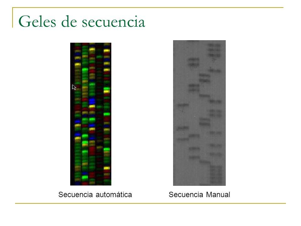Geles de secuencia Secuencia automática Secuencia Manual