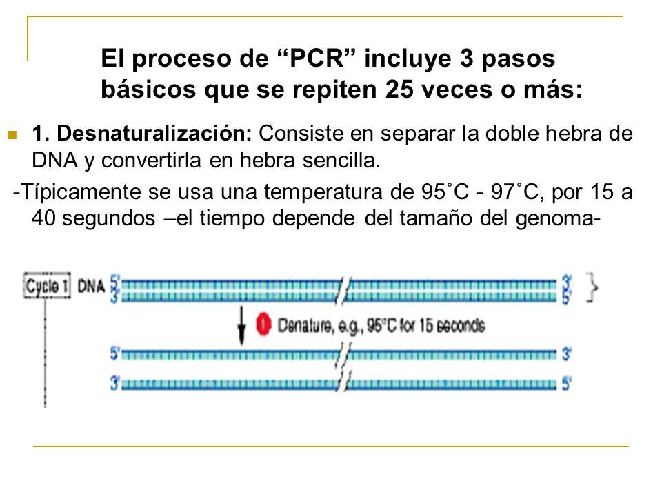 El proceso de PCR incluye 3 pasos básicos que se repiten 25 veces o más: