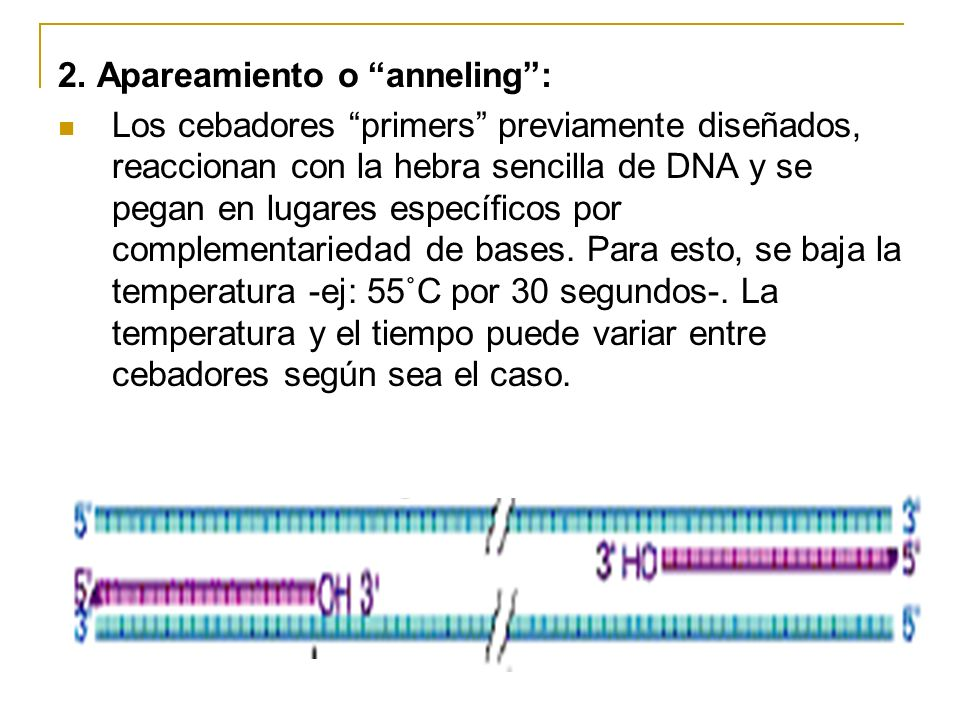 2. Apareamiento o anneling :