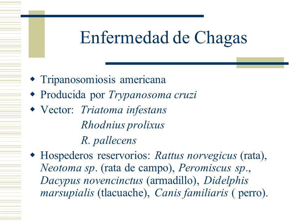 Enfermedad de Chagas Tripanosomiosis americana