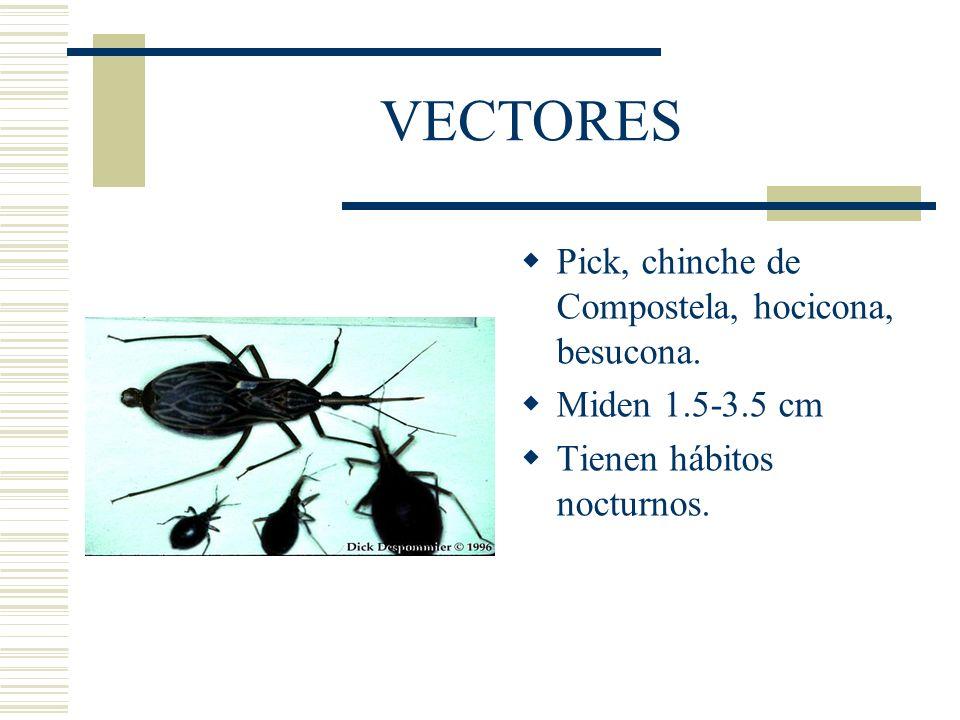 VECTORES Pick, chinche de Compostela, hocicona, besucona.