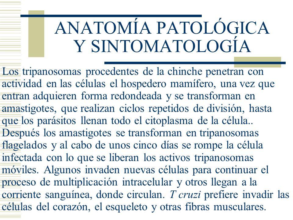 ANATOMÍA PATOLÓGICA Y SINTOMATOLOGÍA