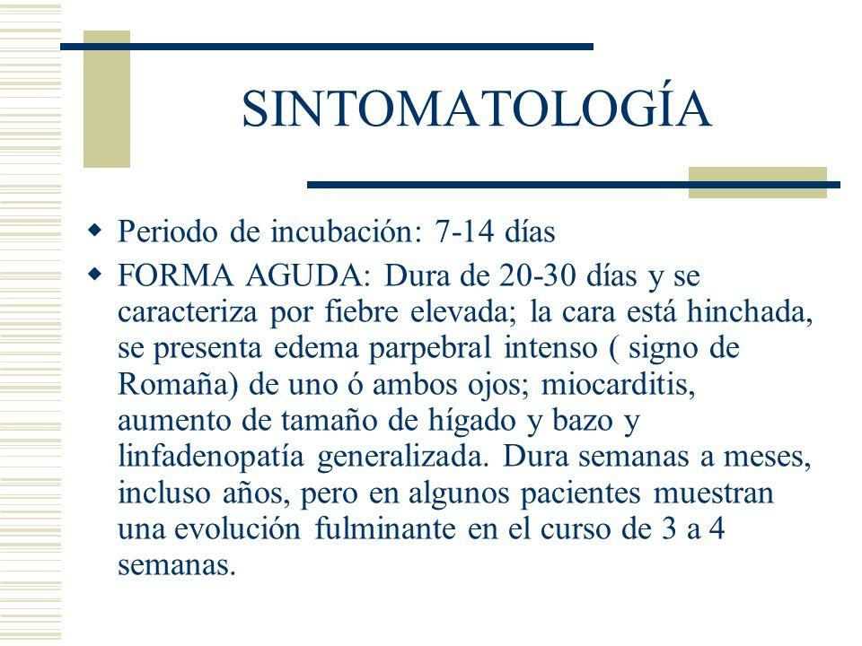 SINTOMATOLOGÍA Periodo de incubación: 7-14 días