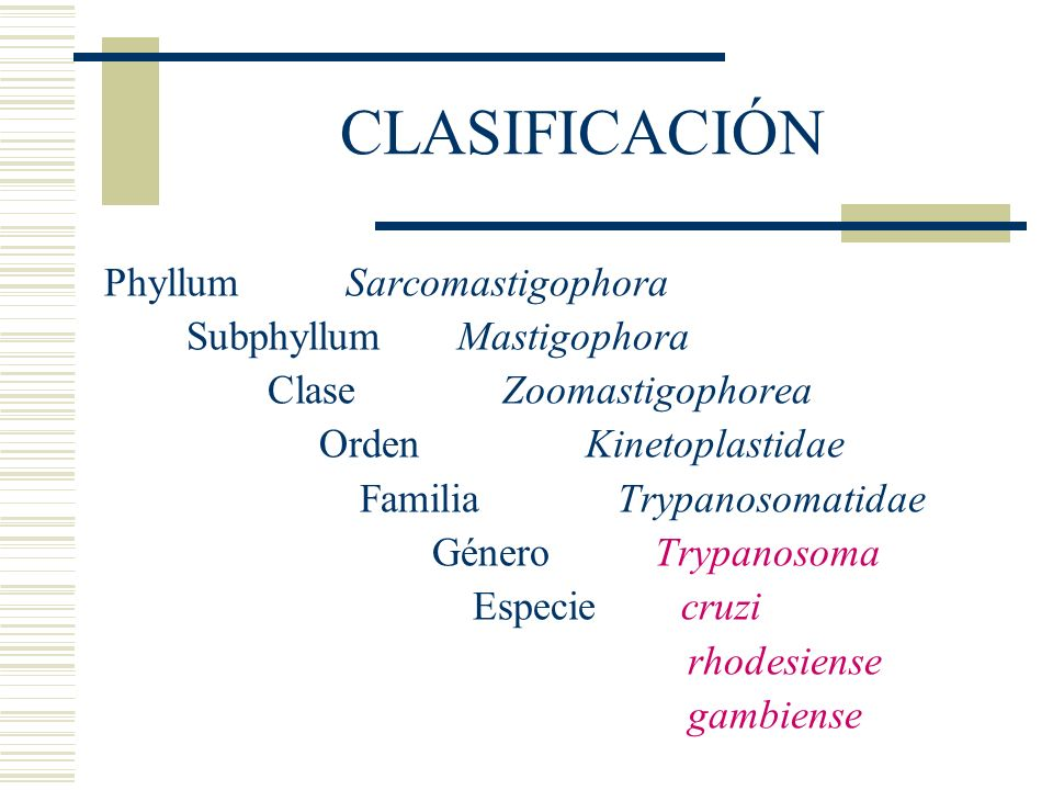 CLASIFICACIÓN Phyllum Sarcomastigophora Subphyllum Mastigophora