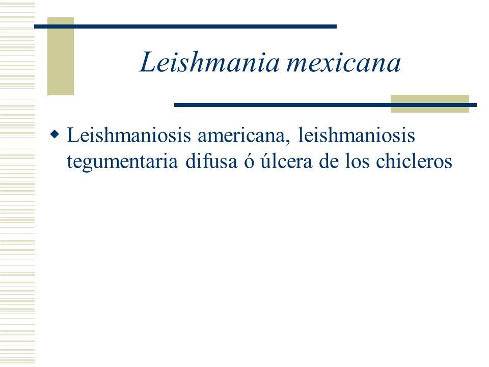 Leishmania mexicana Leishmaniosis americana, leishmaniosis tegumentaria difusa ó úlcera de los chicleros.