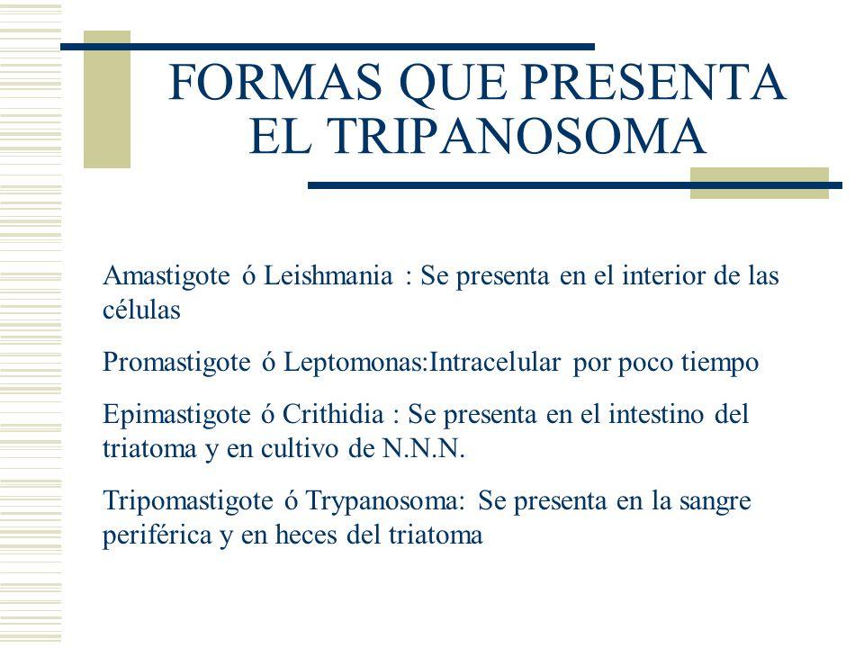 FORMAS QUE PRESENTA EL TRIPANOSOMA